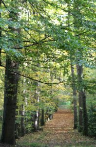 allee_automne