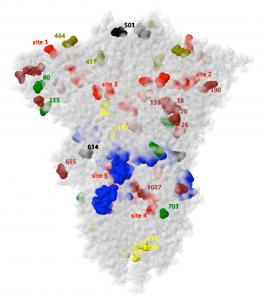 Glycoprotéine de pointe du SARS CoV-2